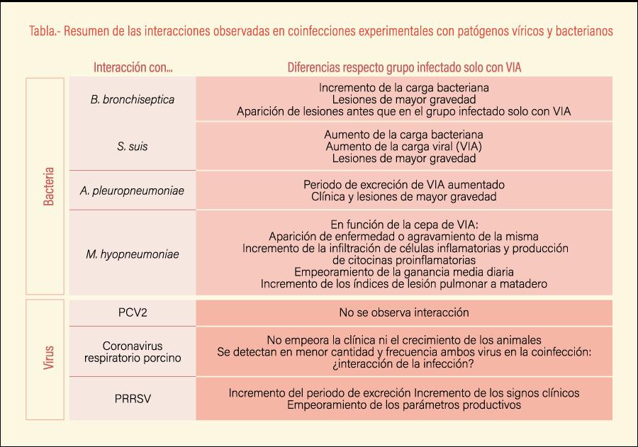 Resumen de las interacciones observadas en coinfecciones experimentales con patógenos víricos y bacterianos