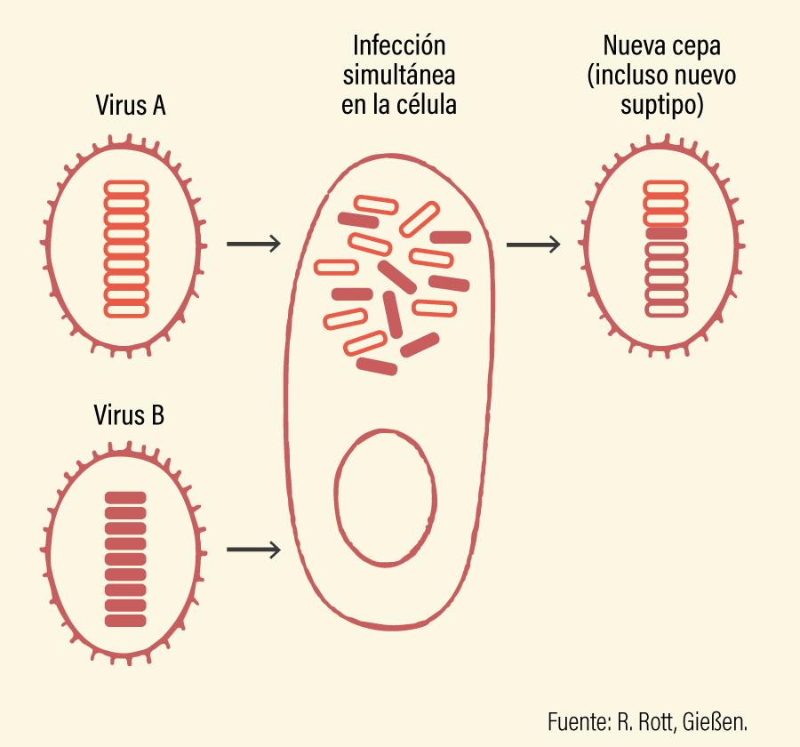 Figura 1. Cambio antigénico, reordenación genética o shift