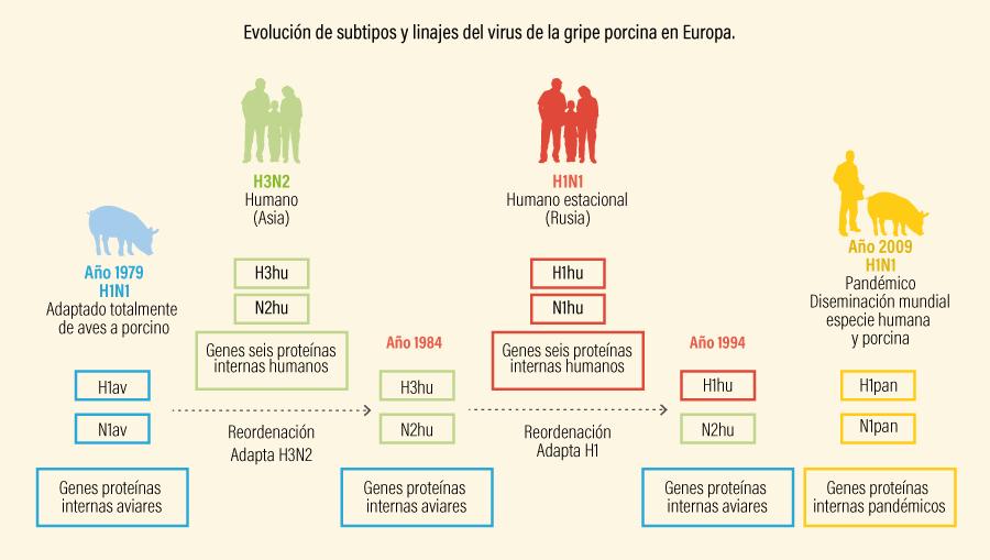 Figura 2. Evolución de subtipos y linajes del virus de la gripe porcina en Europa